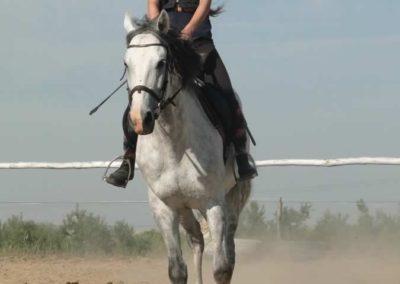 oboz-konie-2015-7-0020