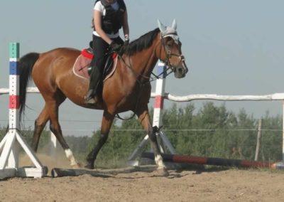 oboz-konie-2015-7-0021