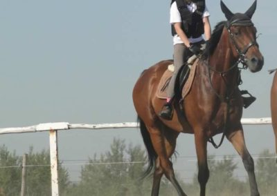 oboz-konie-2015-7-0029
