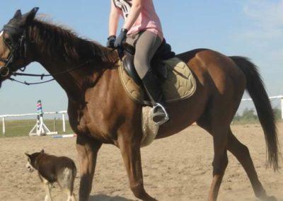 oboz-konie-2015-7-0030