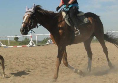oboz-konie-2015-7-0031