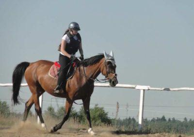 oboz-konie-2015-7-0032