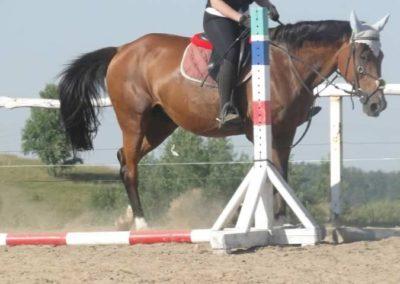 oboz-konie-2015-7-0037
