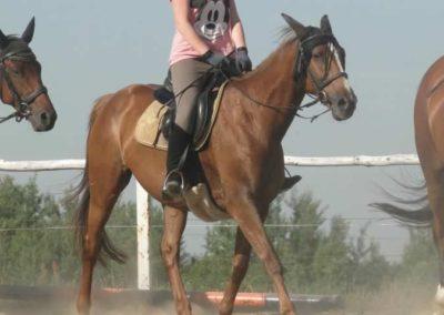 oboz-konie-2015-7-0038