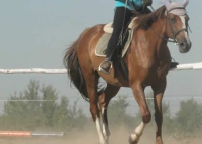 oboz-konie-2015-7-0039