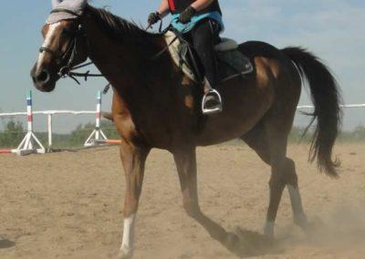 oboz-konie-2015-7-0040