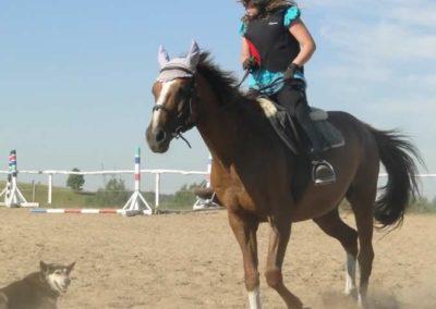 oboz-konie-2015-7-0047
