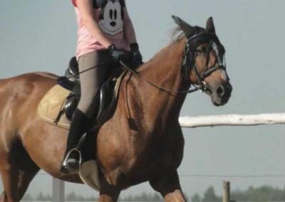 oboz-konie-2015-7-0049