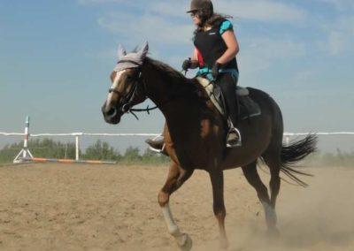 oboz-konie-2015-7-0058