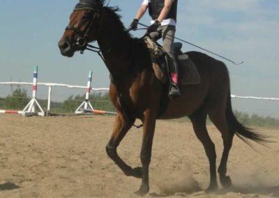 oboz-konie-2015-7-0061