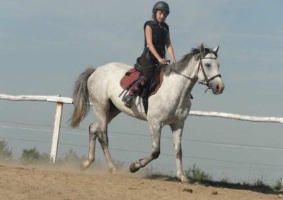 oboz-konie-2015-7-0063