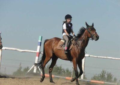 oboz-konie-2015-7-0065