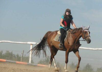 oboz-konie-2015-7-0066
