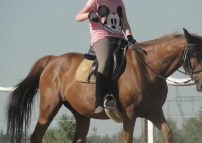 oboz-konie-2015-7-0069