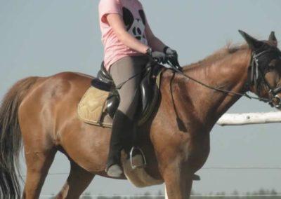 oboz-konie-2015-7-0070