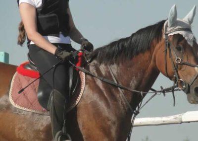oboz-konie-2015-7-0072