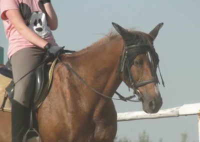 oboz-konie-2015-7-0073