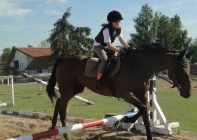 oboz-konie-2015-7-0094