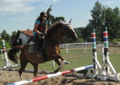 oboz-konie-2015-7-0101