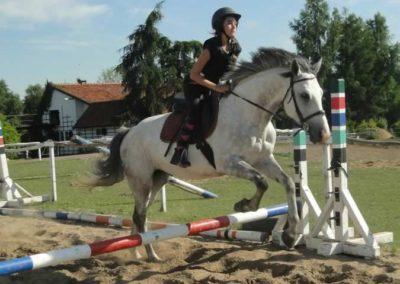 oboz-konie-2015-7-0102