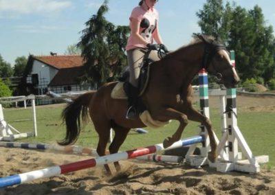 oboz-konie-2015-7-0103