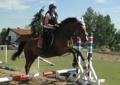 oboz-konie-2015-7-0107
