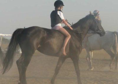 oboz-konie-2015-7-0130