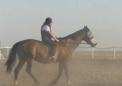 oboz-konie-2015-7-0137