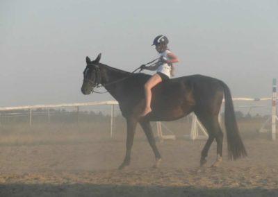 oboz-konie-2015-7-0145